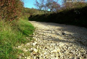 Chemin dans la côte de Pagny-sur-Moselle (54))