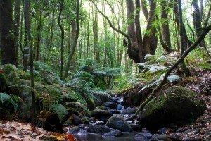 Forêt quaternaire
