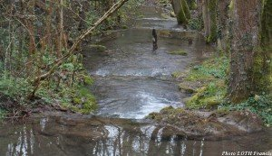 Pagny et environs - Ruisseau de Beaume-Haie